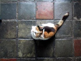 Cat on floor