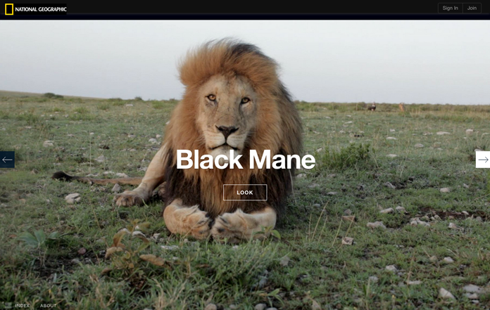 Screenshot from National Geographic's microsite, The Serengeti Lion.