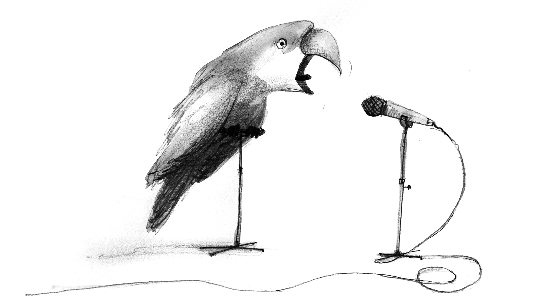 Illustration: A parrot offers advice and answers to all the best questions into a nearby microphone.